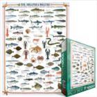 Fish, Shellfish & Mollusks - 1000pc Jigsaw Puzzle by Eurographics