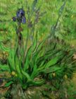 Van Gogh: Iris - 1000pc Jigsaw Puzzle by Eurographics