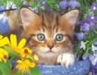 Garden Helper - 500pc Jigsaw Puzzle by Springbok