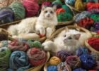 Ragdolls - 275pc Jigsaw Puzzle By Cobble Hill