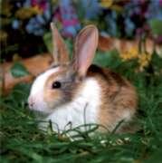 D-Toys Cute Bunny Jigsaw Puzzle