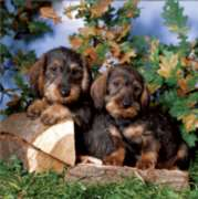 D-Toys Cute Puppies Jigsaw Puzzle