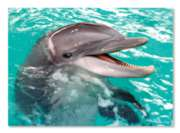 Melissa & Doug Smiling Dolphin Jigsaw Puzzle
