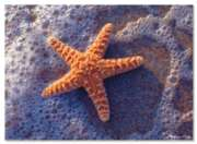 Melissa & Doug Sun-Kissed Sea Star Jigsaw Puzzle