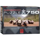 Panda Cubs - 750pc Jigsaw Puzzle by Eurographics