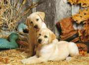 Clementoni Hunting Dogs Jigsaw Puzzle