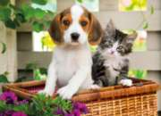 Clementoni The Dog and the Cat Jigsaw Puzzle