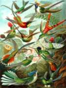 New York Puzzle Company Hummingbirds Jigsaw Puzzle