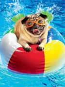 Ceaco Swimming Pug Oversized Jigsaw Puzzle