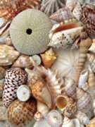 Ceaco Photograph Shells Jogsaw Puzzle