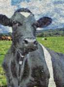 Cow - 1000pc Photomosaic Jigsaw Puzzle by Buffalo Games