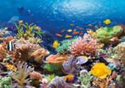 Coral Reef Fishes - 1000pc Jigsaw Puzzle by Castorland