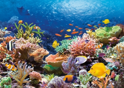 Jigsaw Puzzles - Coral Reef Fishes