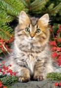 Maine Coon Amongst Berries - 1000pc Jigsaw Puzzle by Castorland