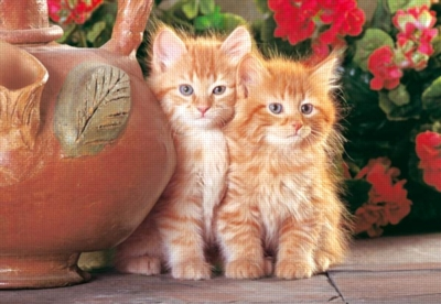 Jigsaw Puzzles - Red Kittens