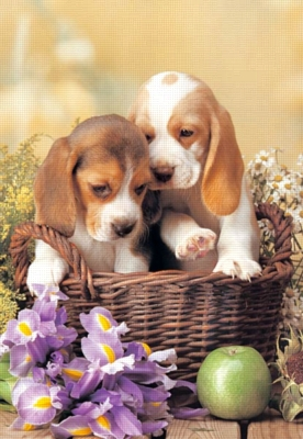 Puppies in the Basket - 260pc Jigsaw Puzzle by Castorland