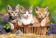 Three Lovely Kittens - 500pc Jigsaw Puzzle by Castorland