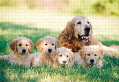 Melissa and Doug Jigsaw Puzzles for Kids - Golden Retriever with Puppies