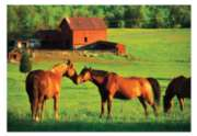 Kissing Horses - 200pc Jigsaw Puzzle By Melissa & Doug