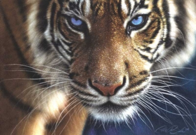 Blue Eyes - 250pc Jigsaw Puzzle by FX Schmid