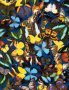 Butterfly Collection - 500pc Jigsaw Puzzle by Springbok