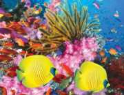 Springbok Jigsaw Puzzles - Coral Carnival