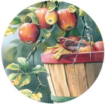 Springbok Large Format Jigsaw Puzzles - Apple Harvest