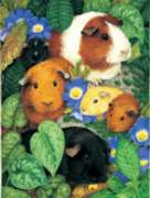 Jigsaw Puzzles for Kids - Guinea Pigs