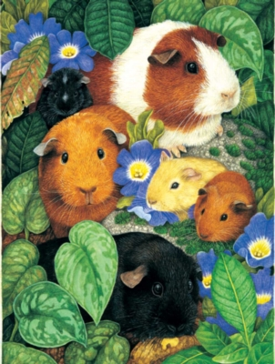 Guinea Pigs - 100pc Jigsaw Puzzle by Sunsout