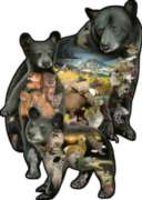 Bear-ly There - 1000pc Shaped Jigsaw Puzzle by Sunsout