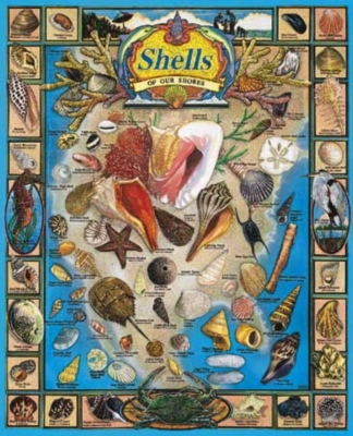 Shells of our Shores - 1000pc Jigsaw Puzzle By White Mountain