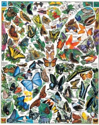 Butterflies of the World - 1000pc Jigsaw Puzzle By White Mountain