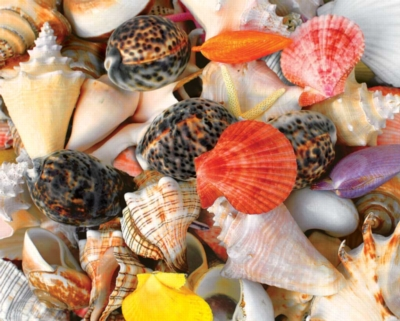 Seashells - 1500pc Jigsaw Puzzle by Springbok