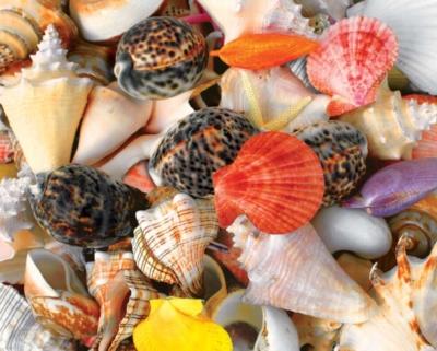 Springbok Jigsaw Puzzles - Seashells
