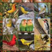 Songbird Symphony - 500pc Jigsaw Puzzle by Springbok