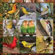 Springbok Jigsaw Puzzles - Songbird Symphony