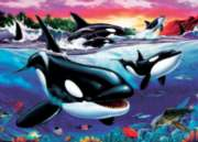 Killer Whales - 20pc Tray Puzzle by Cobble Hill