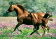 Mare and Foal - 500pc Jigsaw Puzzle by Buffalo Games