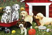 Jigsaw Puzzles - Puppy Playmates