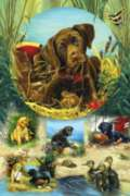 Pond Puppies - 1000pc Family Style Jigsaw Puzzle by Sunsout