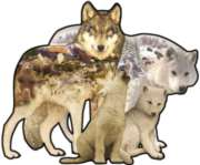 Wolf Song - 1000pc Shaped Jigsaw Puzzle By Sunsout