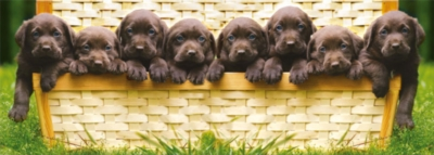 Puppies Panorama - 1000pc Panoramic Jigsaw Puzzle by Educa