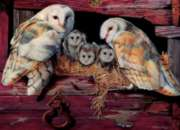 Cobble Hill Jigsaw Puzzles - Barn Owls