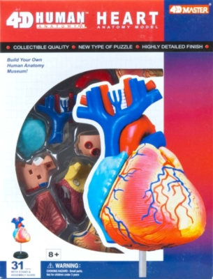 Educational Puzzles - Human Heart