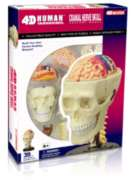 Human Cranial Nerve Skull - 39pc 4D Human Anatomy Puzzle