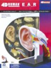 Human Ear - 22pc 4D Human Anatomy Educational Puzzle