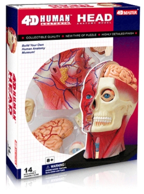 Human Head - 14pc 4D Human Anatomy Puzzle