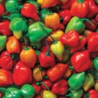 Hot Peppers - 500pc Jigsaw Puzzle by Springbok