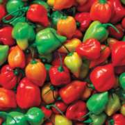 Springbok Jigsaw Puzzles - Hot Peppers