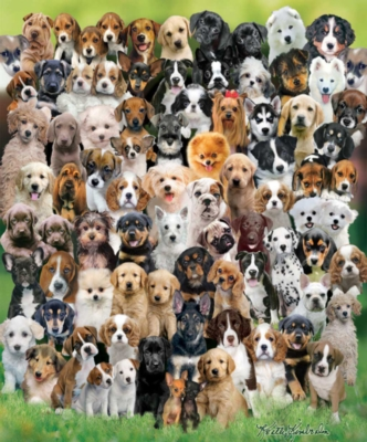 Puppy Love - 1000pc Jigsaw Puzzle by White Mountain